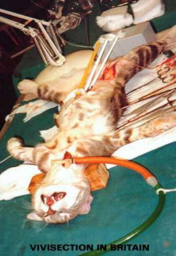 vivisection.jpg