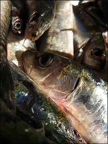 poissons333.jpg