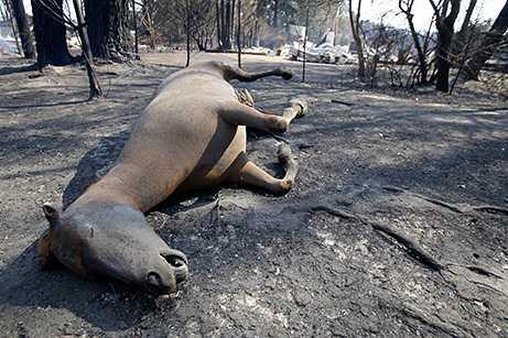 090209-04-australia-fire_big.jpg