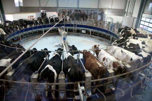 Mise-en-demeure-pour-la-ferme-usine-des-1000-vaches_article_landscape_pm_v8.jpg