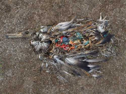 Ainsi meurent les albatros..